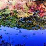 神戸森林植物園