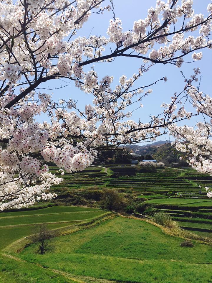 淡路島 花の旅
