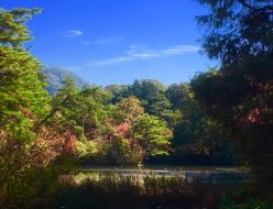 神戸市立森林植物園 紅葉散策