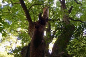 神戸 生田の森にて