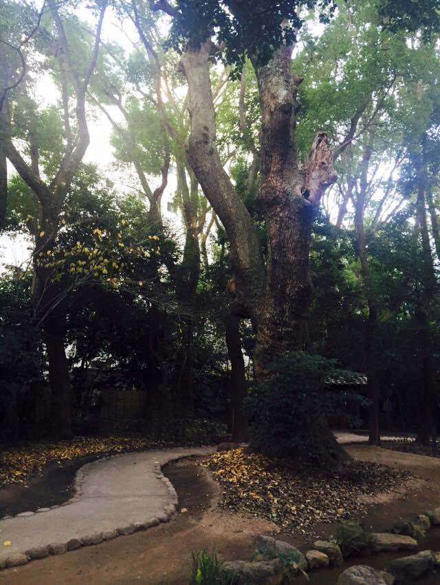 生田神社と生田の森へ