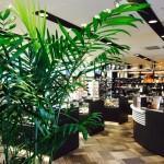 梅田茶屋町店の観葉植物