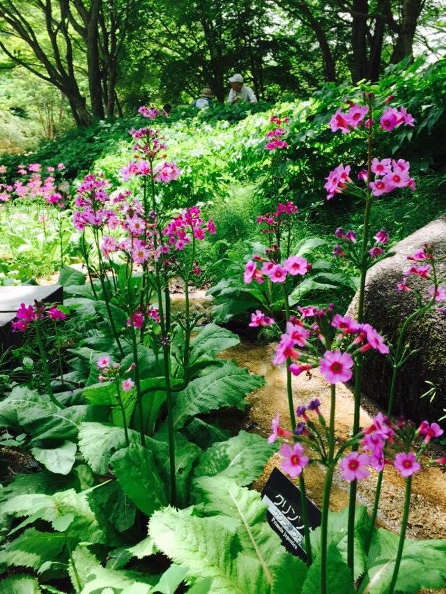 初夏の六甲高山植物園