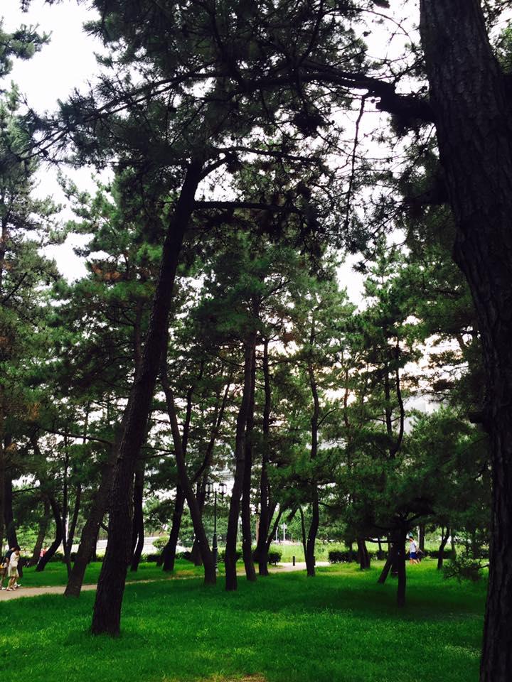 舞子の松並木散歩-2
