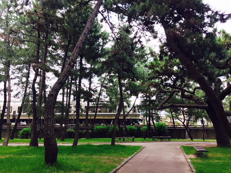 舞子の松並木散歩-3