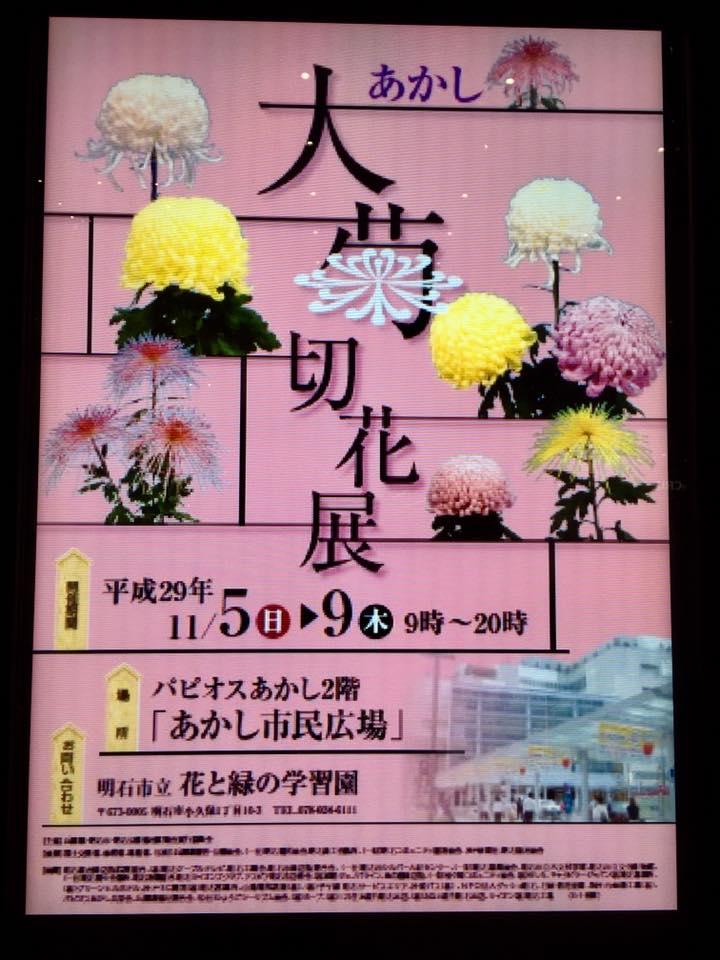パピオス明石 大菊切花展