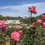 須磨離宮公園の薔薇