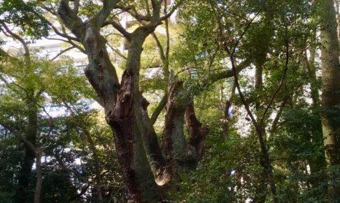 パワースポット 生田の森へ