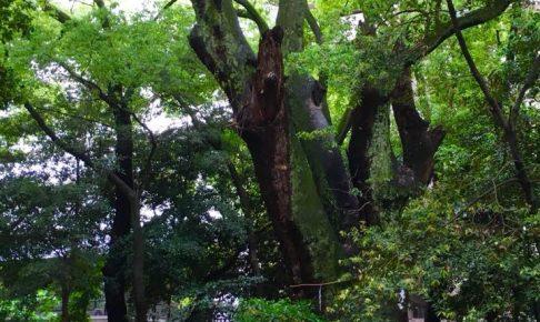 生田の森から北野工房へ