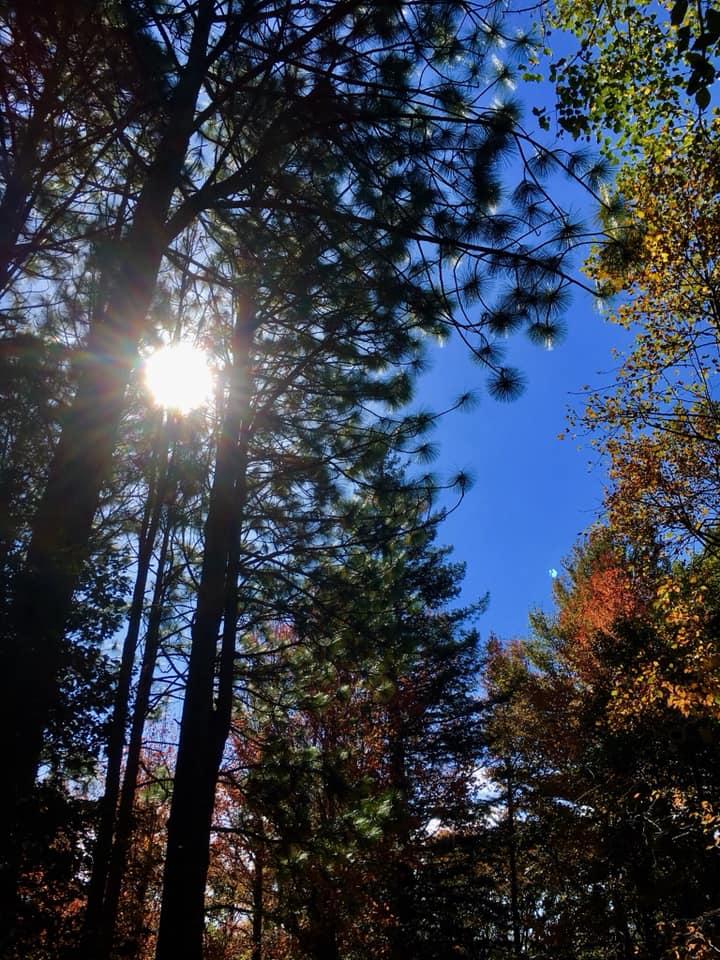 神戸市立森林植物園にて森林浴