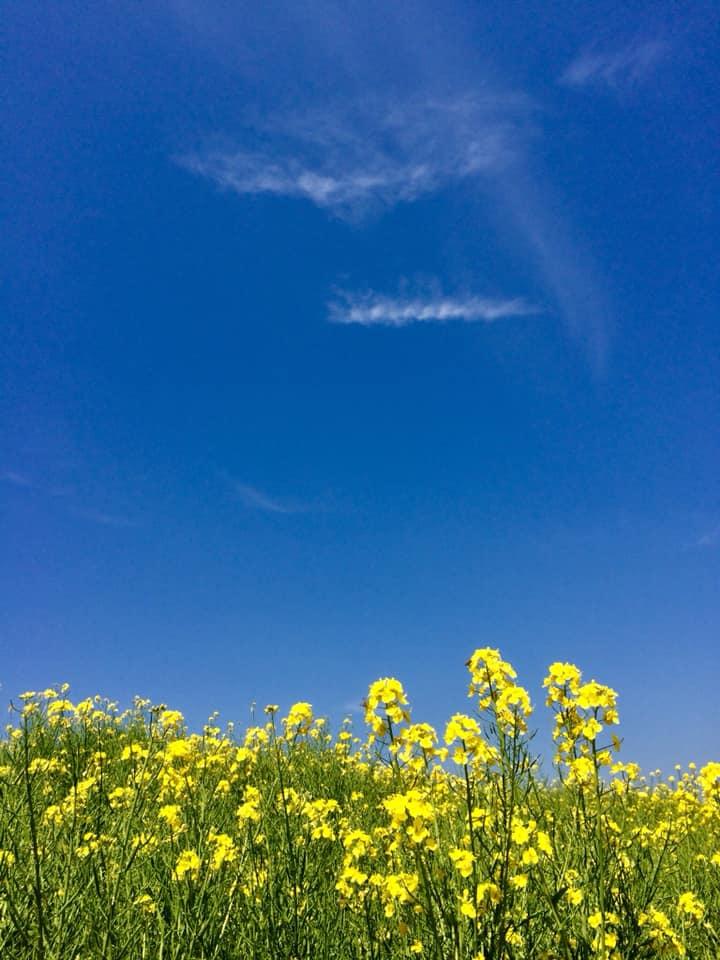 菜の花や月は東に日は西に・与謝蕪村
