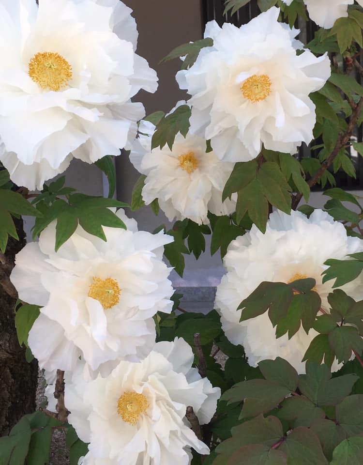 生田神社にて王者の風格