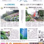 アジサイ 西1位 神戸森林植物園