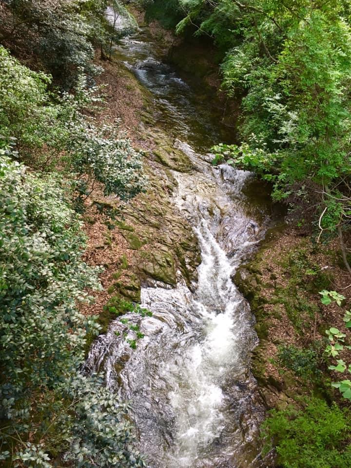 新緑の布引渓流