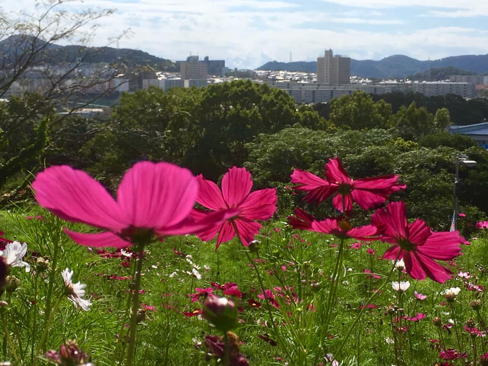 神戸市須磨区の秋桜と風景印