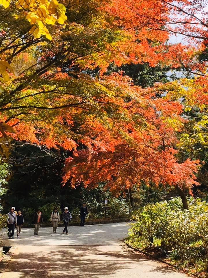 神戸森林植物園の魅力満喫